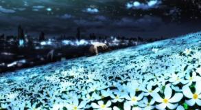 homura field flowers